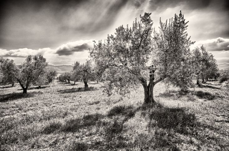 Agriturismo Casa Greppo, Umbria