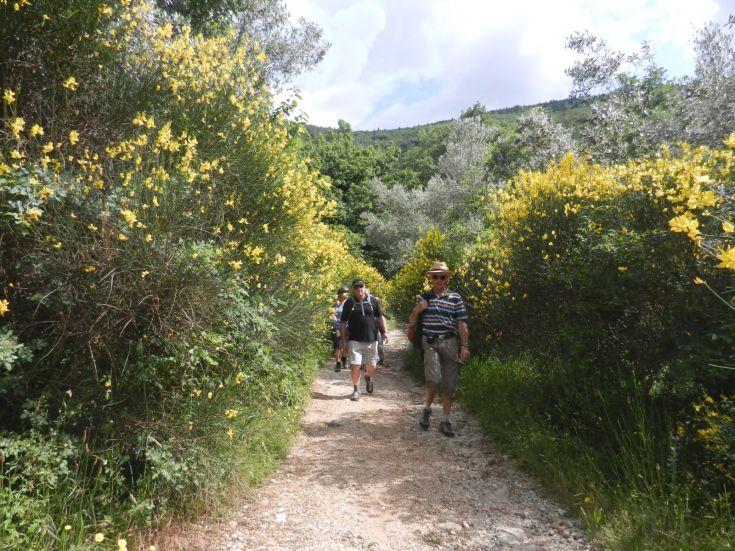 Escursione a piedi in estate, durante la fioritura della ginestra